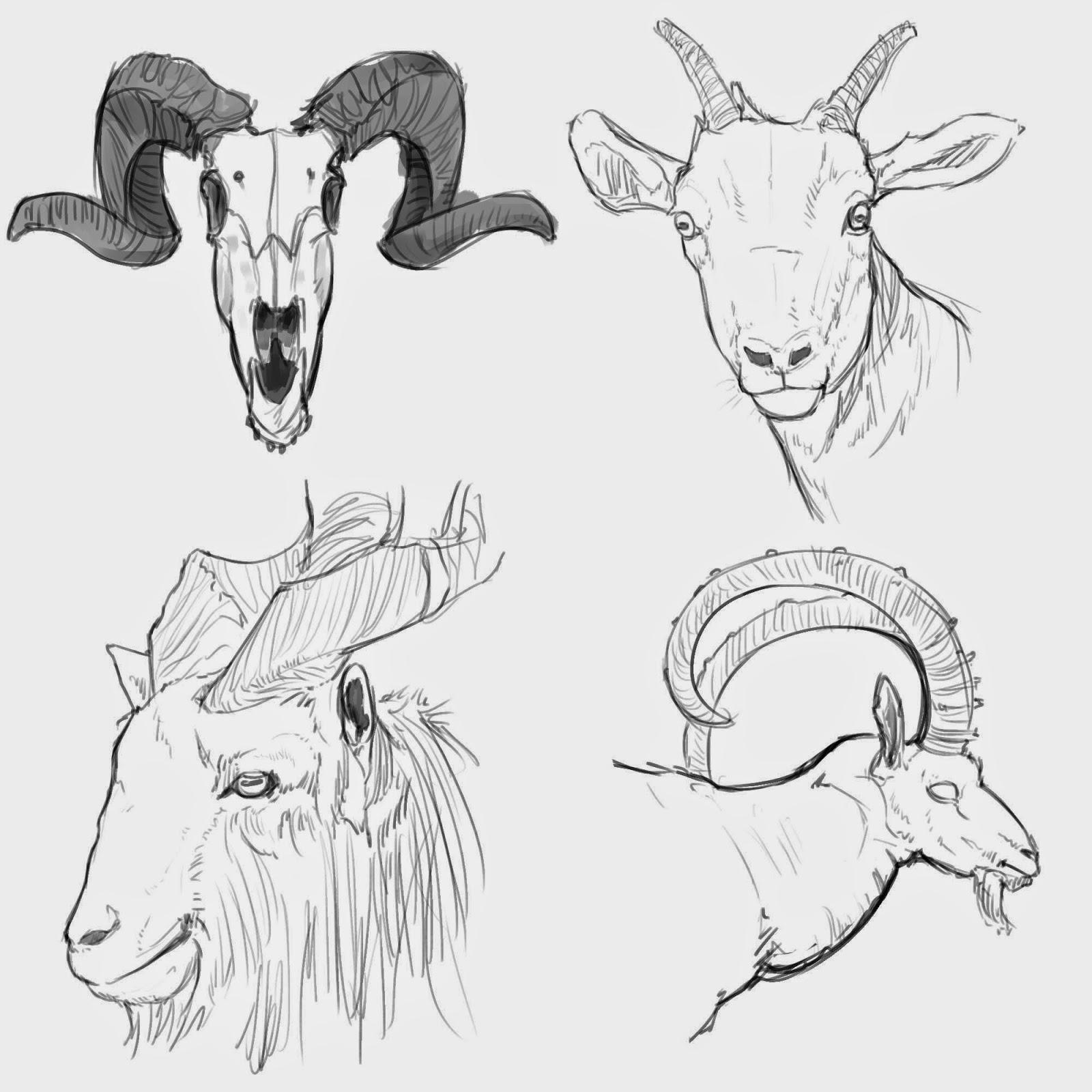 КАРАПУЗОВЕДЕНИЕ Goat Face Side Drawing