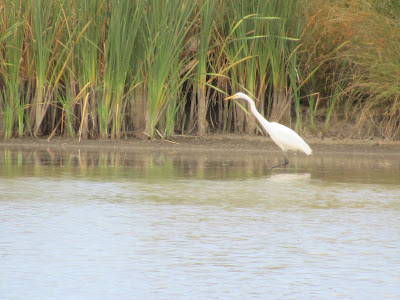 Ed's Pond Llano Seco Unit