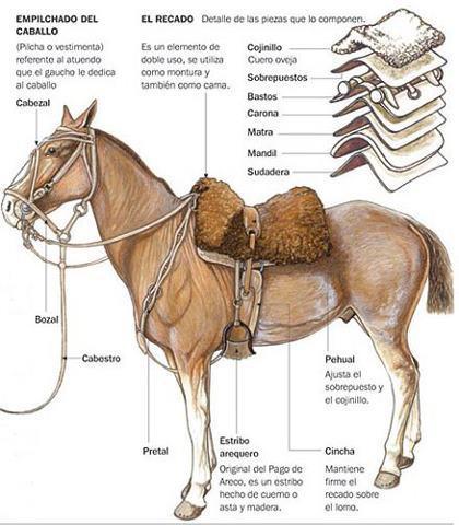 1468ca8b8a Toma las medidas necesarias para asegurarte de que la silla de montar  encaje con el caballo. Las personas que son nuevas en equitación a menudo  se equivocan ...