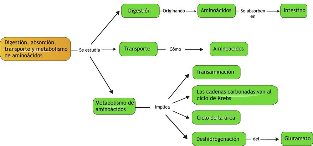 Apuntes para novat@s de Enfermería: Tema 23 - METABOLISMO..