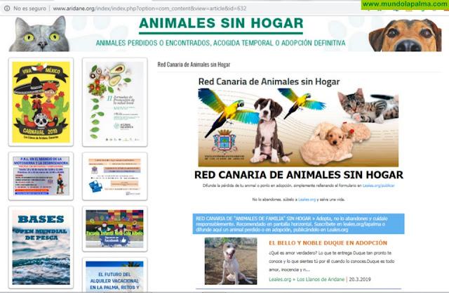 El Ayuntamiento de Los Llanos se adhiere a la Red Canaria de Animales sin Hogar