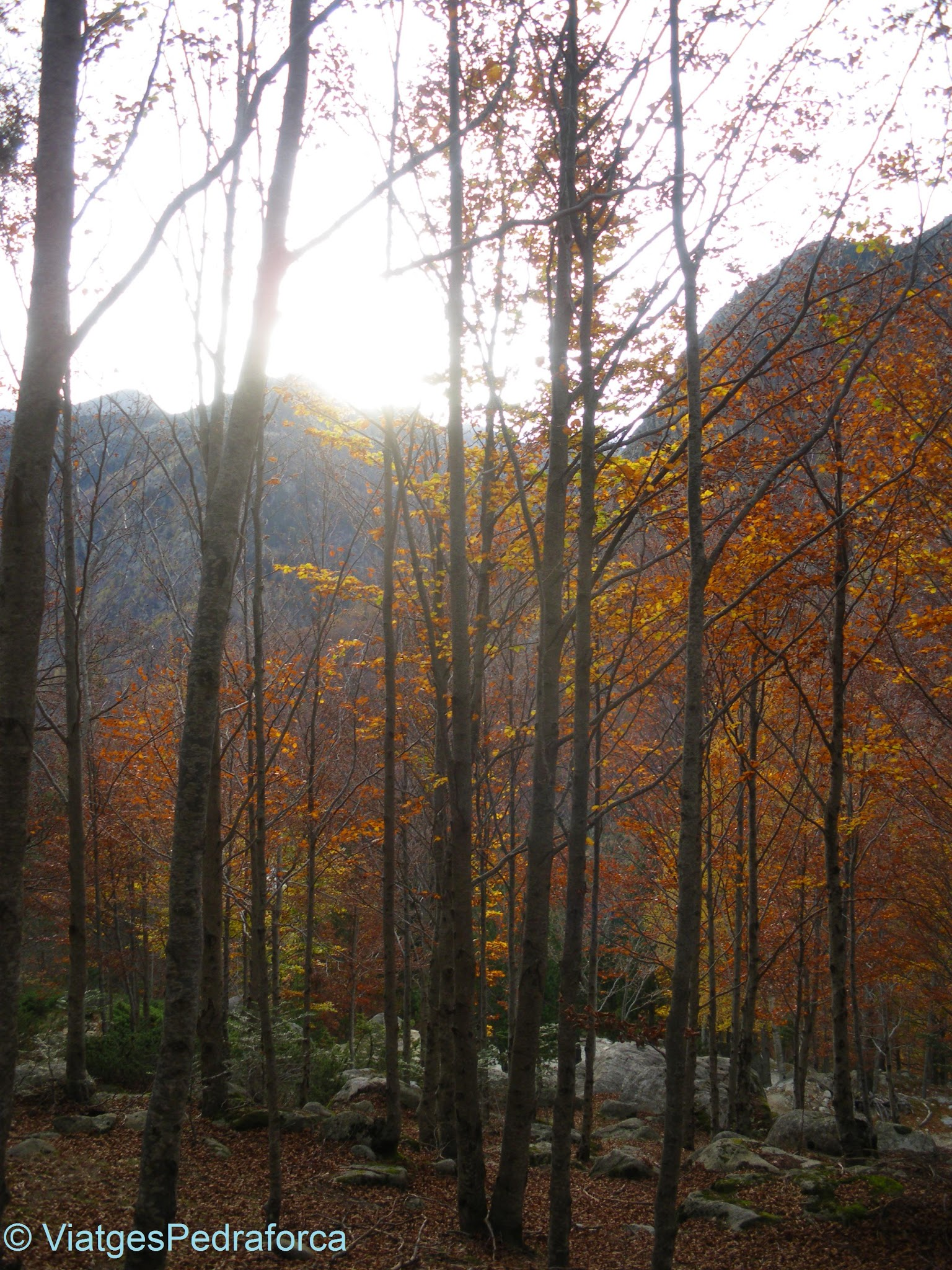 Vall de Besiberri, fageda, tardor, Alta Ribagorça, Catalunya, Pirineus de Lleida