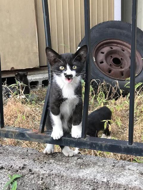 Chú mèo con sở hữu vết bớt hình của mình ngay trên mặt