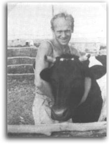 חנילביץ' והפרה