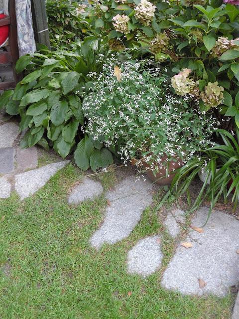 donice w ogrodzie
