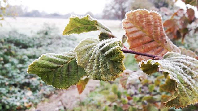 Project 366 2016 day 313 - Cold and frosty morning // 76sunflowers