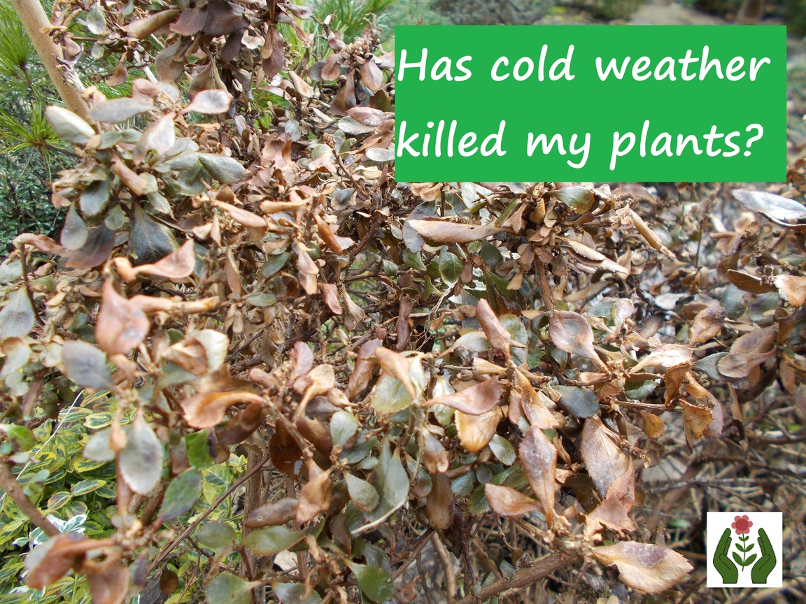 The Green Fingered Blog Has Cold Weather Killed My Plants