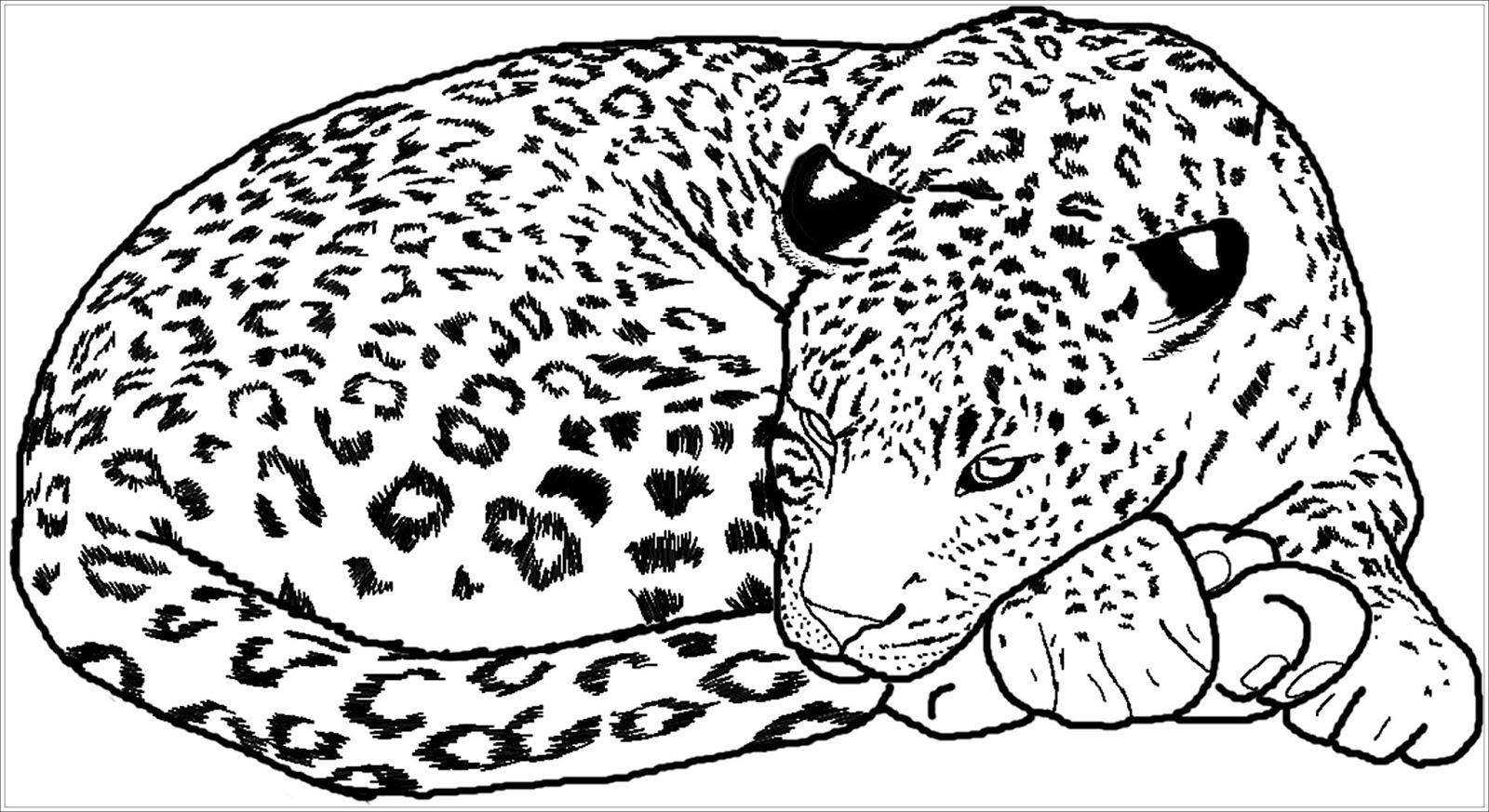 Ausmalbilder zum Ausdrucken: Ausmalbilder Gepard Kostenlos