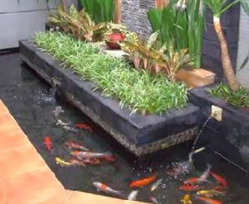 taman rumah minimalis dengan kolam ikan tampak minimalis