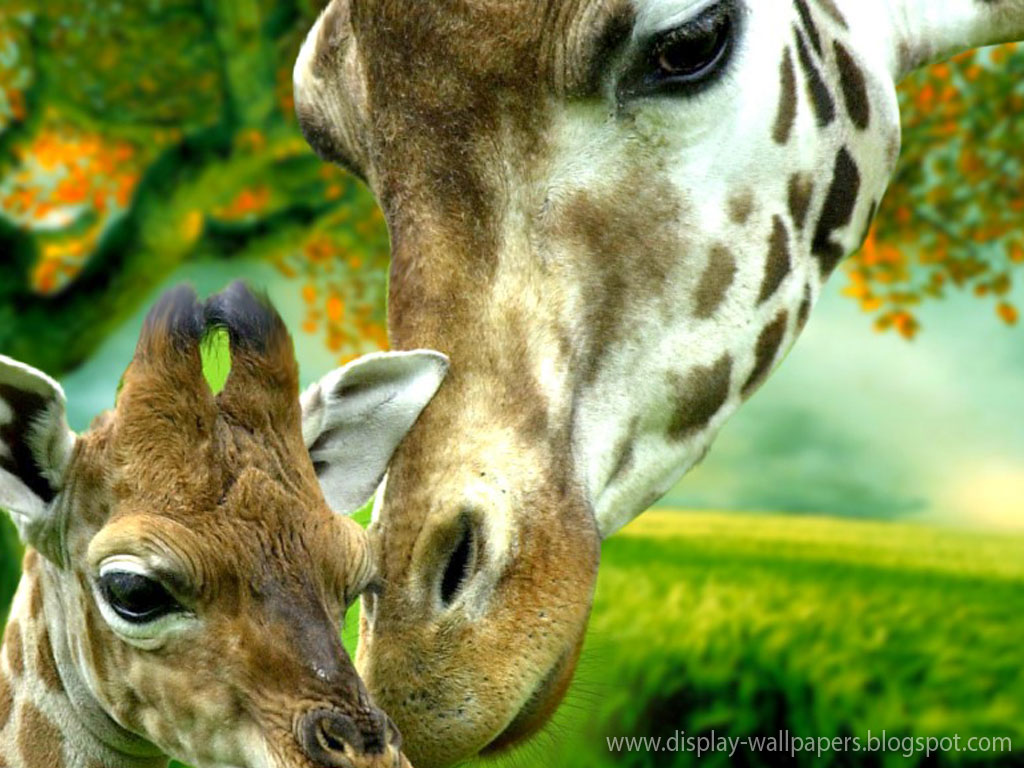 Animation Wall: Cute Animals Wallpaper Download