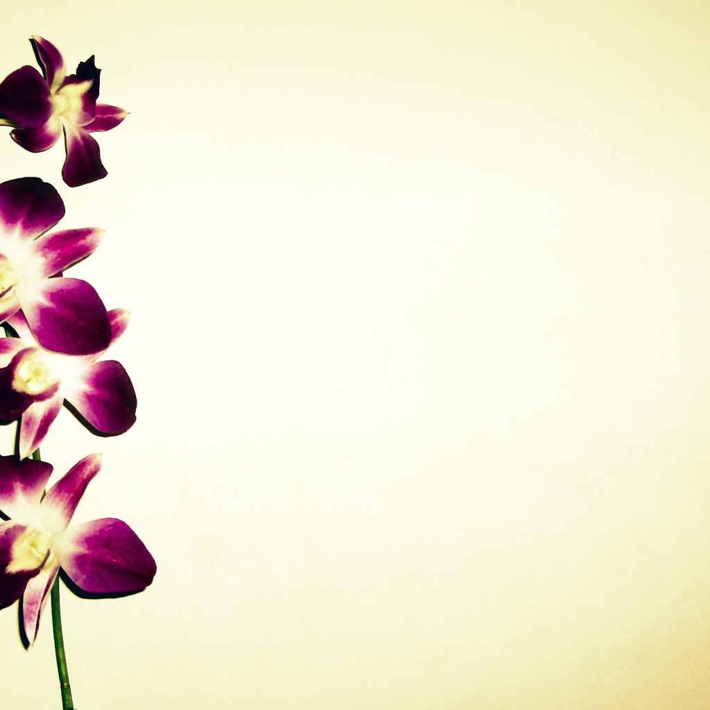 orchid wallpapers backgrounds images - photo #34