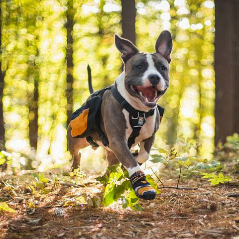 High-Tech Gadgets For Your Dog (15) 10