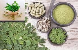 Various Amazing Health Benefits of Moringa Oleifera