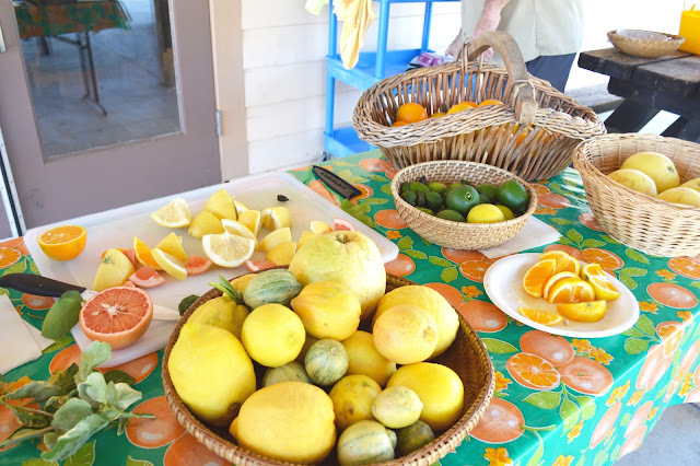 california citrus state historic park orange tasting