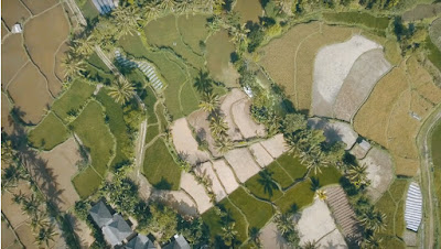 A royalty free of aerial drone shot of  Tete batu rice terrace and tabacco terrace