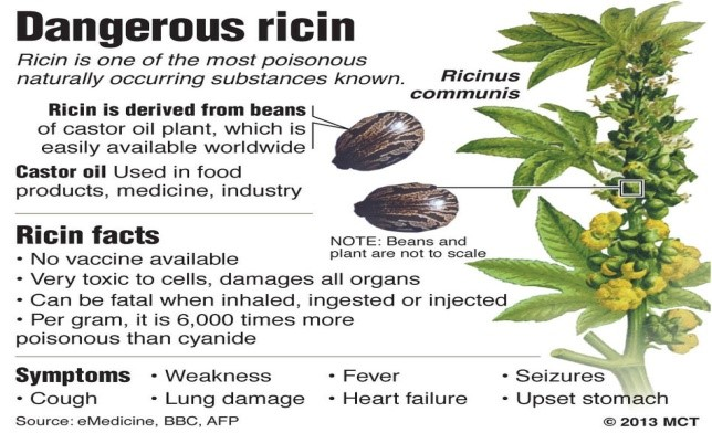 Castor Bean Poison Recipe