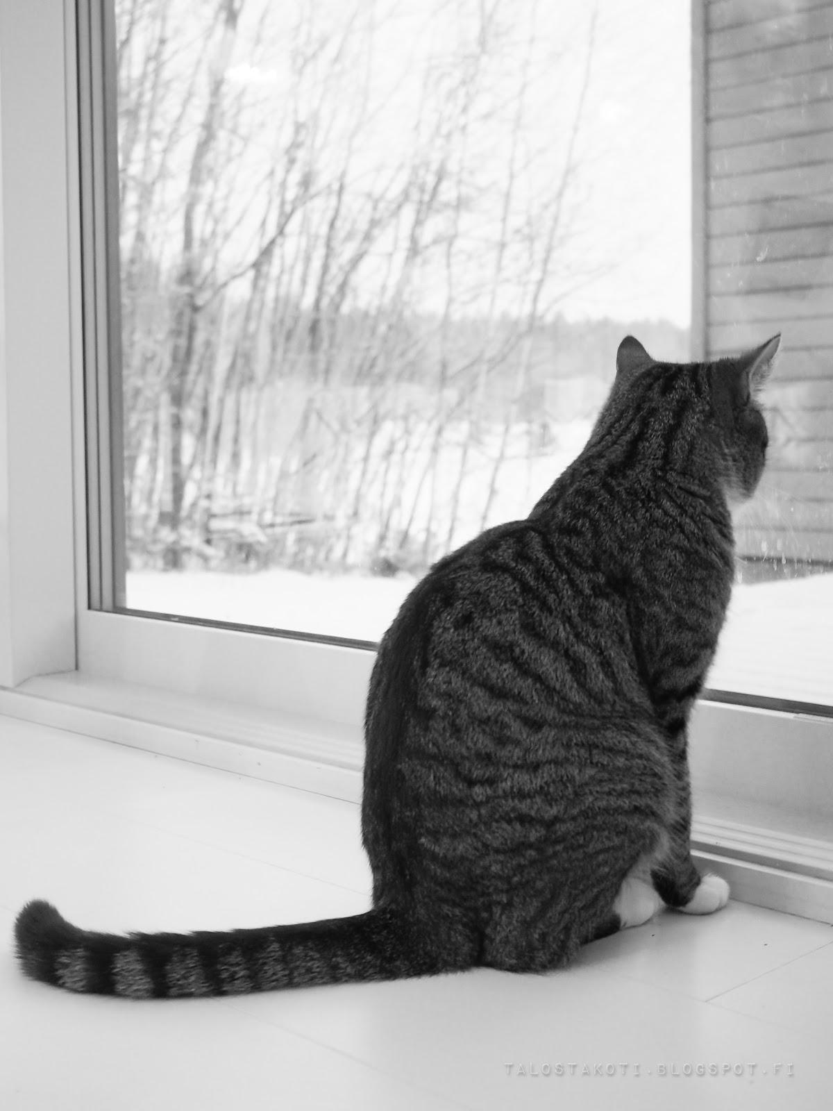 kissa, keittiö, talostakoti