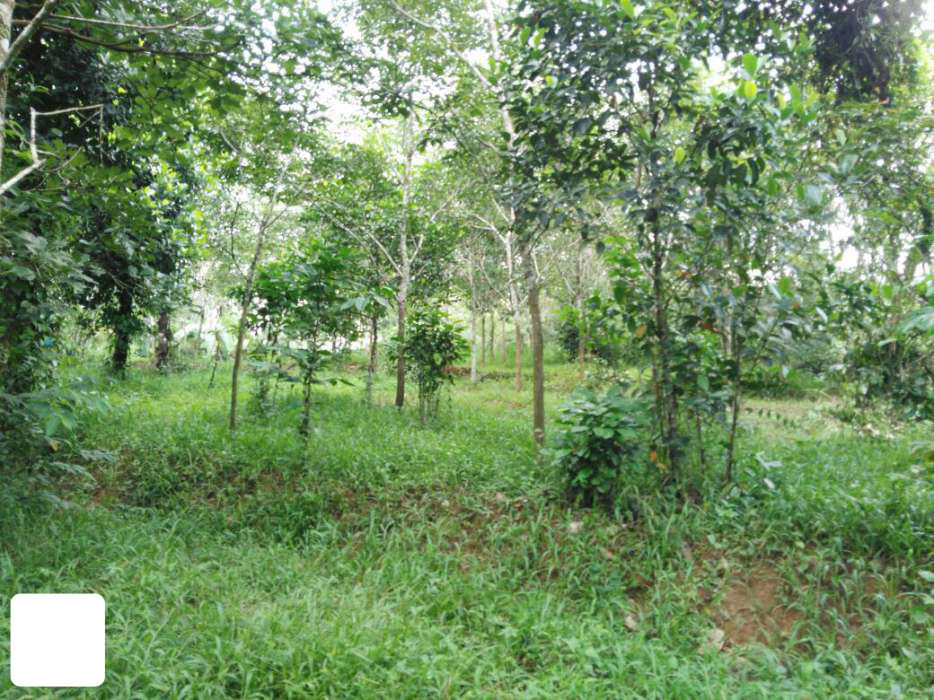 Mananthavady Main road frontage 1 Acre Ph:919562720812 | REAL ESTATE