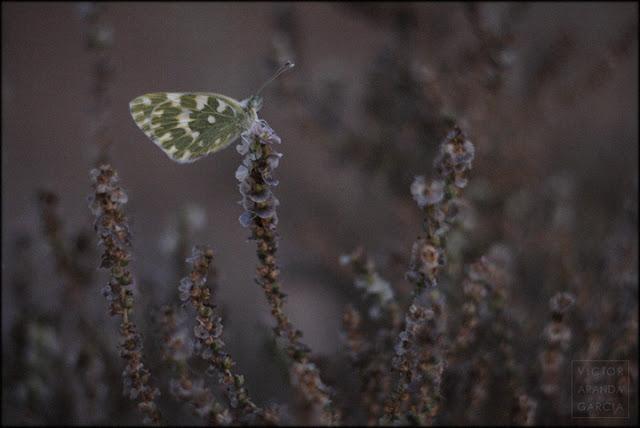 naturaleza,mariposa,planta,flores,ocaso,belleza,naturaleza