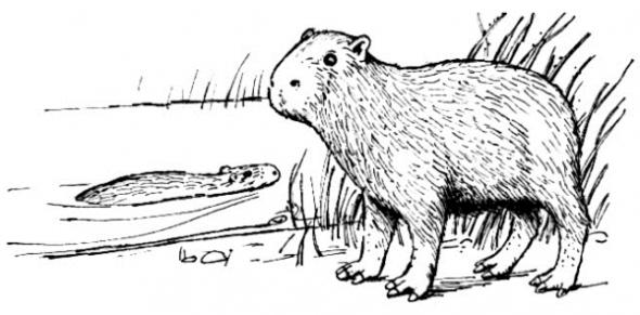 coloring pages capybara as pets - photo#5