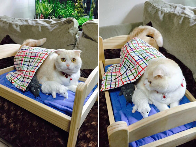 Teneri cuccioli notizie ikea e il letto per bambole - Cuccia per gatti ikea ...