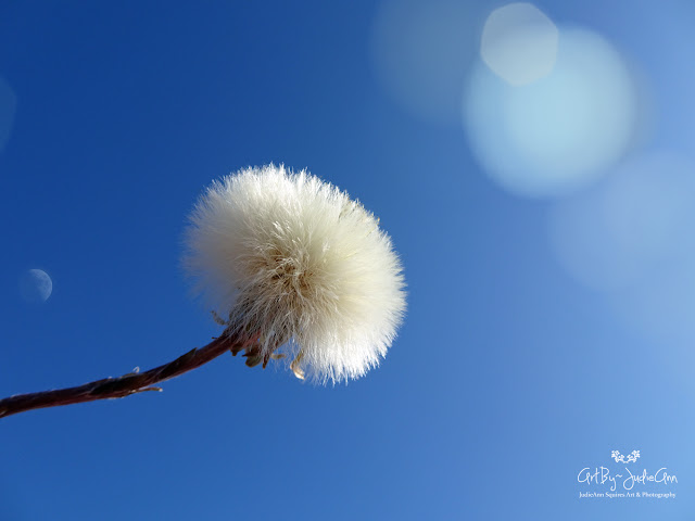 Fluffy flower blue sky photo