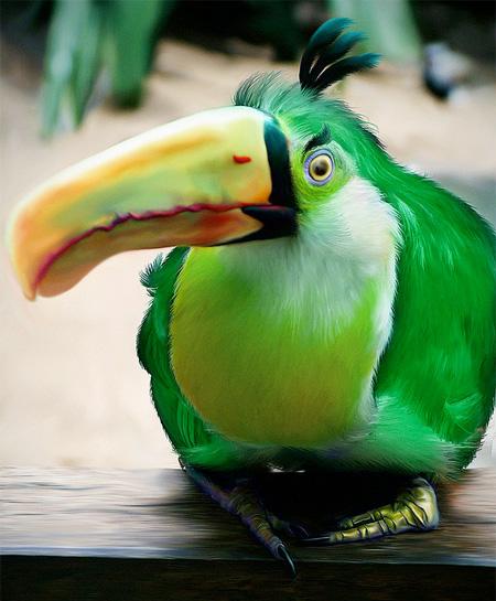 Angry Bird Asli - Reverendum
