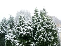 Schnee am Morgen...