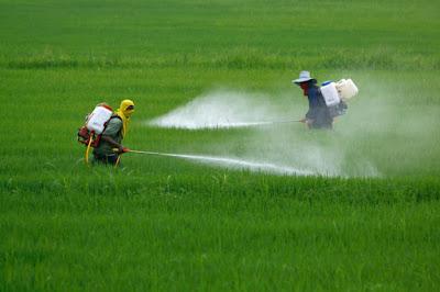 Pesticidas matam 200 mil pessoas por intoxicação aguda todo ano