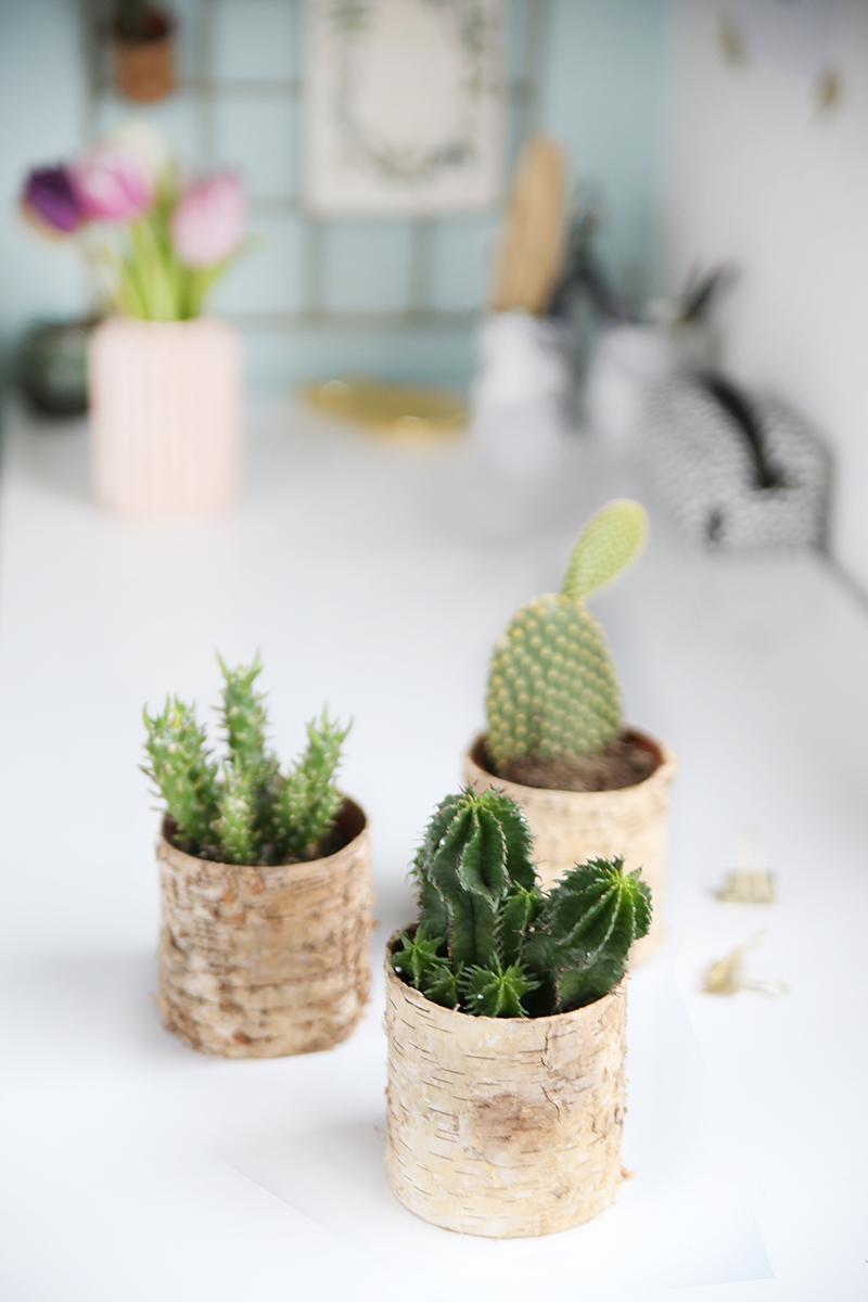 DIY: Selbstgemachte Pflanztöpfe aus Birkenrinde