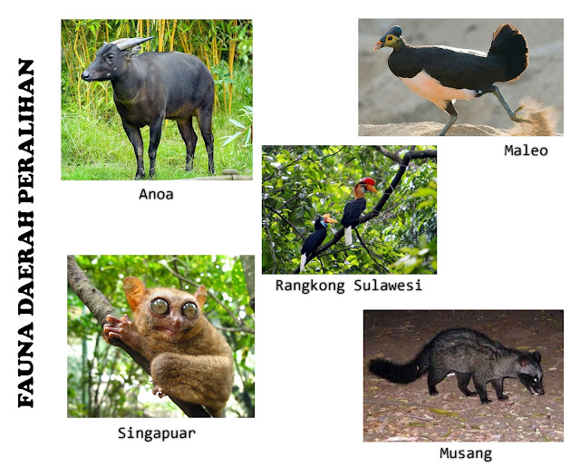 Fauna Peralihan