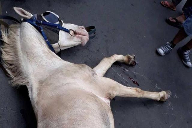 Kuda delman terluka di Sarinah, Jakarta Pusat, Minggu (19/11/2017).(Instagram @jktinfo)