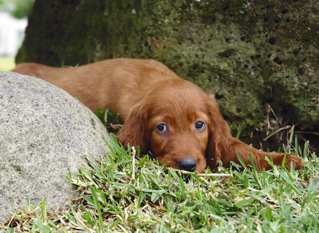 Czy psy cierpią na depresję?