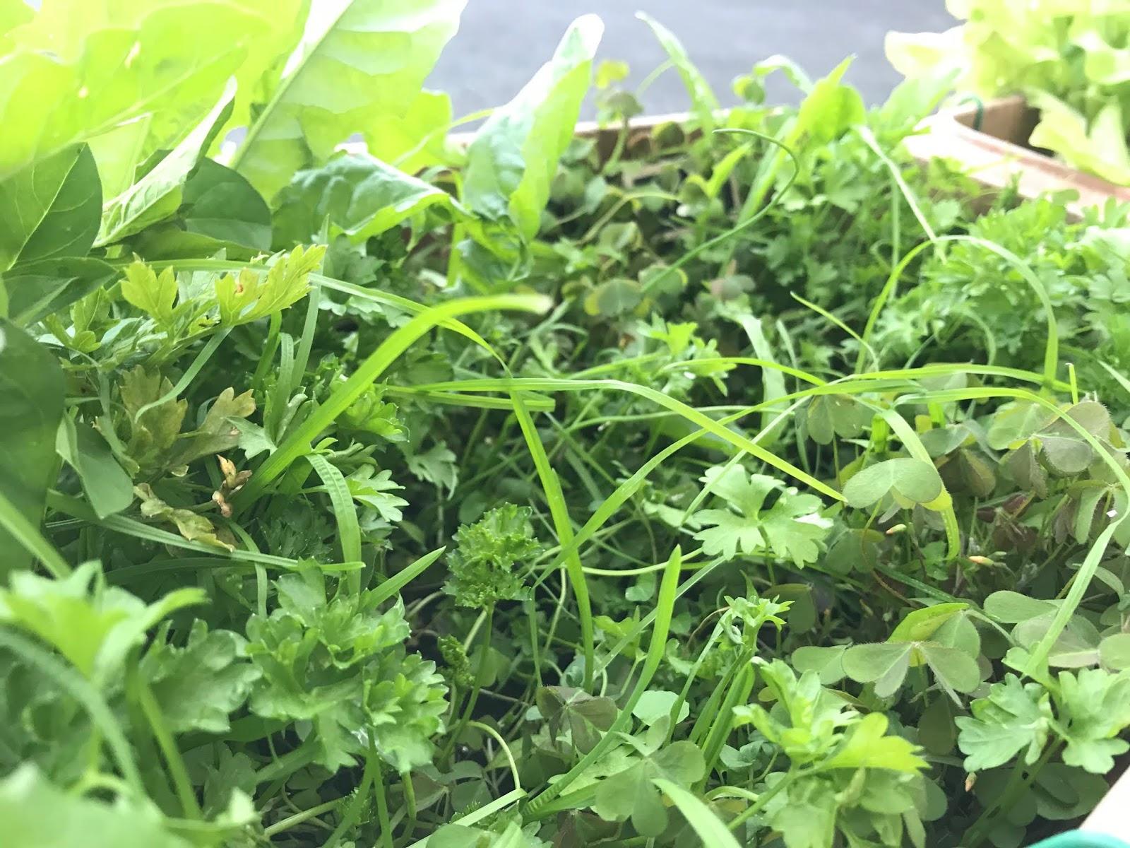 potager en jardinière