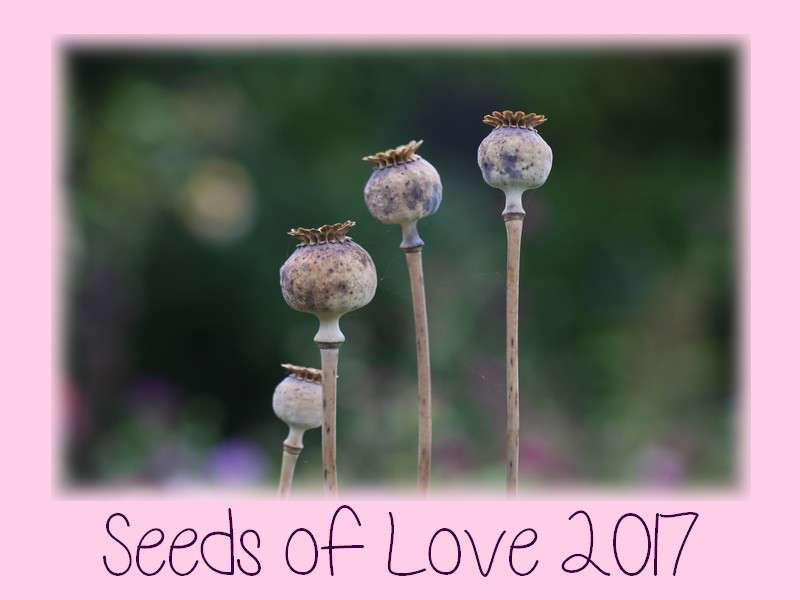 Seeds of Love 2017