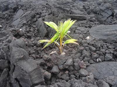 Suksesi Ekologi