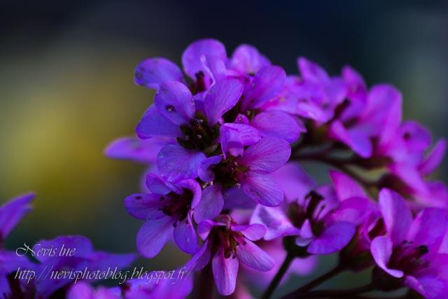 fleur jardin 2
