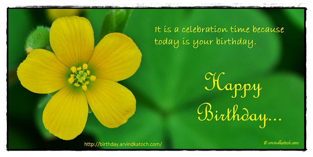 Birthday Card, Tiny, Wild flower, celebration, Time, Birthday,