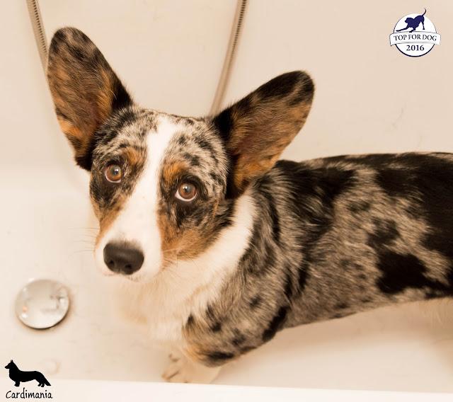 overzoo, szampon dla psów, kąpiel psów, mycie psów, pranie psów