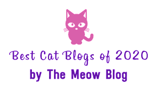 We're In The Best Cat Blogs of 2020