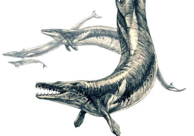 15-metre-long ancient whale Basilosaurus isis was top marine predator