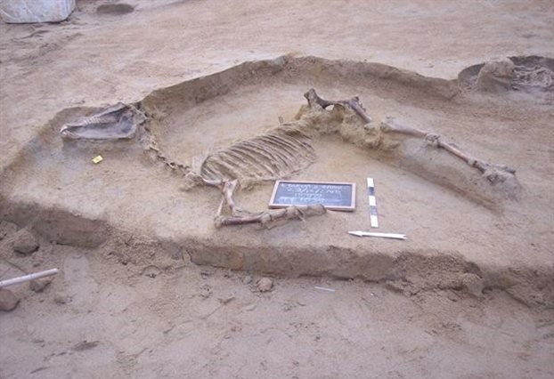 Ancient horse burial discovered near Athens