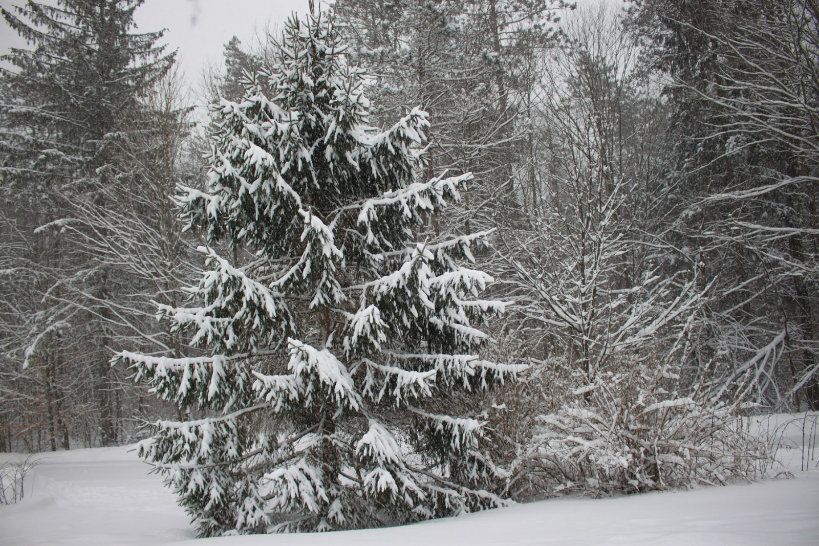 What Little Snow Weve Had This Winter >> Reflections Of Katlupe Winter Time Blues Known As Snow