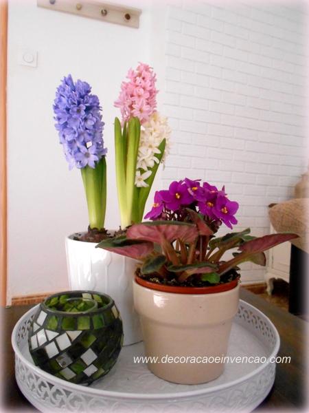 bulbos de jacinto como plantar