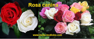 Health Vagina From Roses