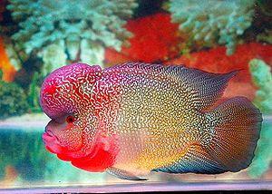 Jual Habitat Ikan Louhan di Alam Liar,  Harga Habitat Ikan Louhan di Alam Liar,  Toko Habitat Ikan Louhan di Alam Liar,  Diskon Habitat Ikan Louhan di Alam Liar,  Beli Habitat Ikan Louhan di Alam Liar,  Review Habitat Ikan Louhan di Alam Liar,  Promo Habitat Ikan Louhan di Alam Liar,  Spesifikasi Habitat Ikan Louhan di Alam Liar,  Habitat Ikan Louhan di Alam Liar Murah,  Habitat Ikan Louhan di Alam Liar Asli,  Habitat Ikan Louhan di Alam Liar Original,  Habitat Ikan Louhan di Alam Liar Jakarta,  Jenis Habitat Ikan Louhan di Alam Liar,  Budidaya Habitat Ikan Louhan di Alam Liar,  Peternak Habitat Ikan Louhan di Alam Liar,  Cara Merawat Habitat Ikan Louhan di Alam Liar,  Tips Merawat Habitat Ikan Louhan di Alam Liar,  Bagaimana cara merawat Habitat Ikan Louhan di Alam Liar,  Bagaimana mengobati Habitat Ikan Louhan di Alam Liar,  Ciri-Ciri Hamil Habitat Ikan Louhan di Alam Liar,  Kandang Habitat Ikan Louhan di Alam Liar,  Ternak Habitat Ikan Louhan di Alam Liar,  Makanan Habitat Ikan Louhan di Alam Liar,  Habitat Ikan Louhan di Alam Liar Termahal,  Adopsi Habitat Ikan Louhan di Alam Liar,  Jual Cepat Habitat Ikan Louhan di Alam Liar,