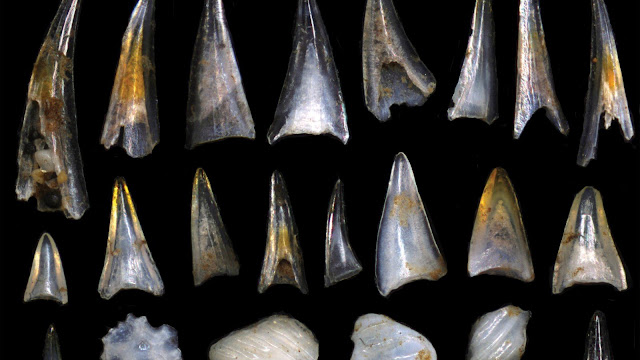 Fish teeth mark periods of evolution