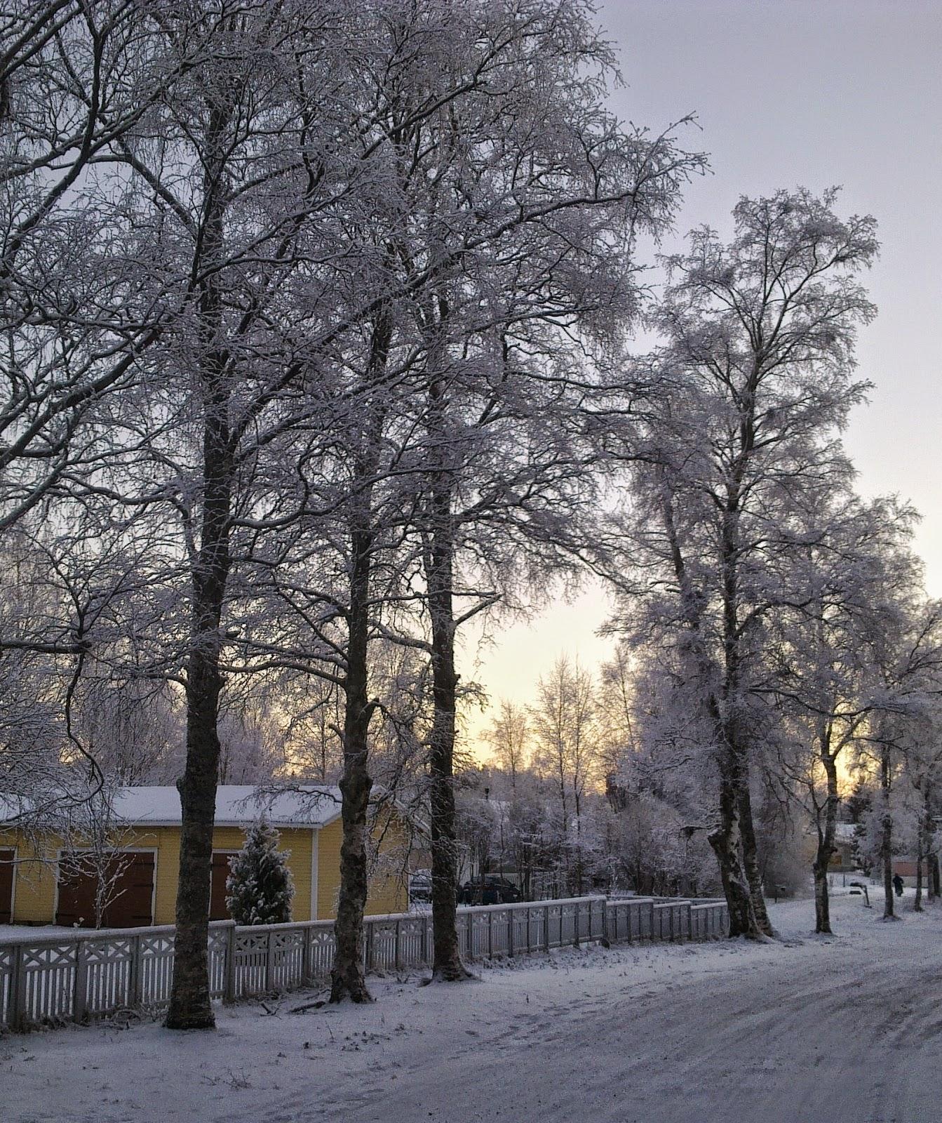 talvi, huurre, koivut
