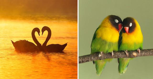 Monogamous Relationships Exist Throughout the animal Kingdom