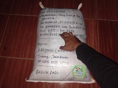JOHN PN Sumba Timur, NTT  (Sesudah Packing)